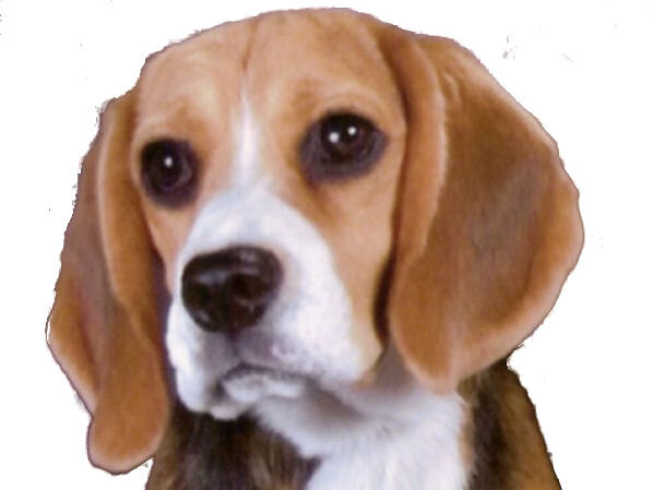 Best Dog Bed for Beagle